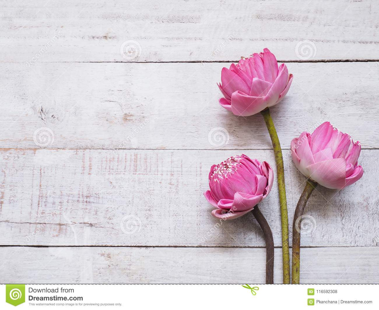 Pink Lotus Flowers On Wooden Table Stock Photo Image Of Border