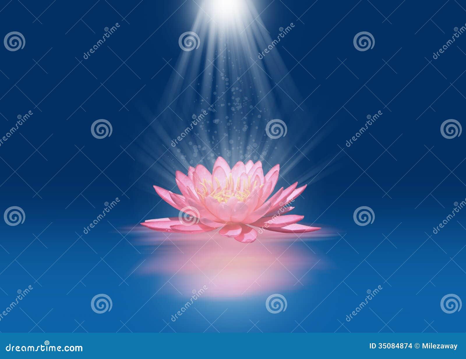Pink flower background 1377212 - Light Pink Flower Wallpaper