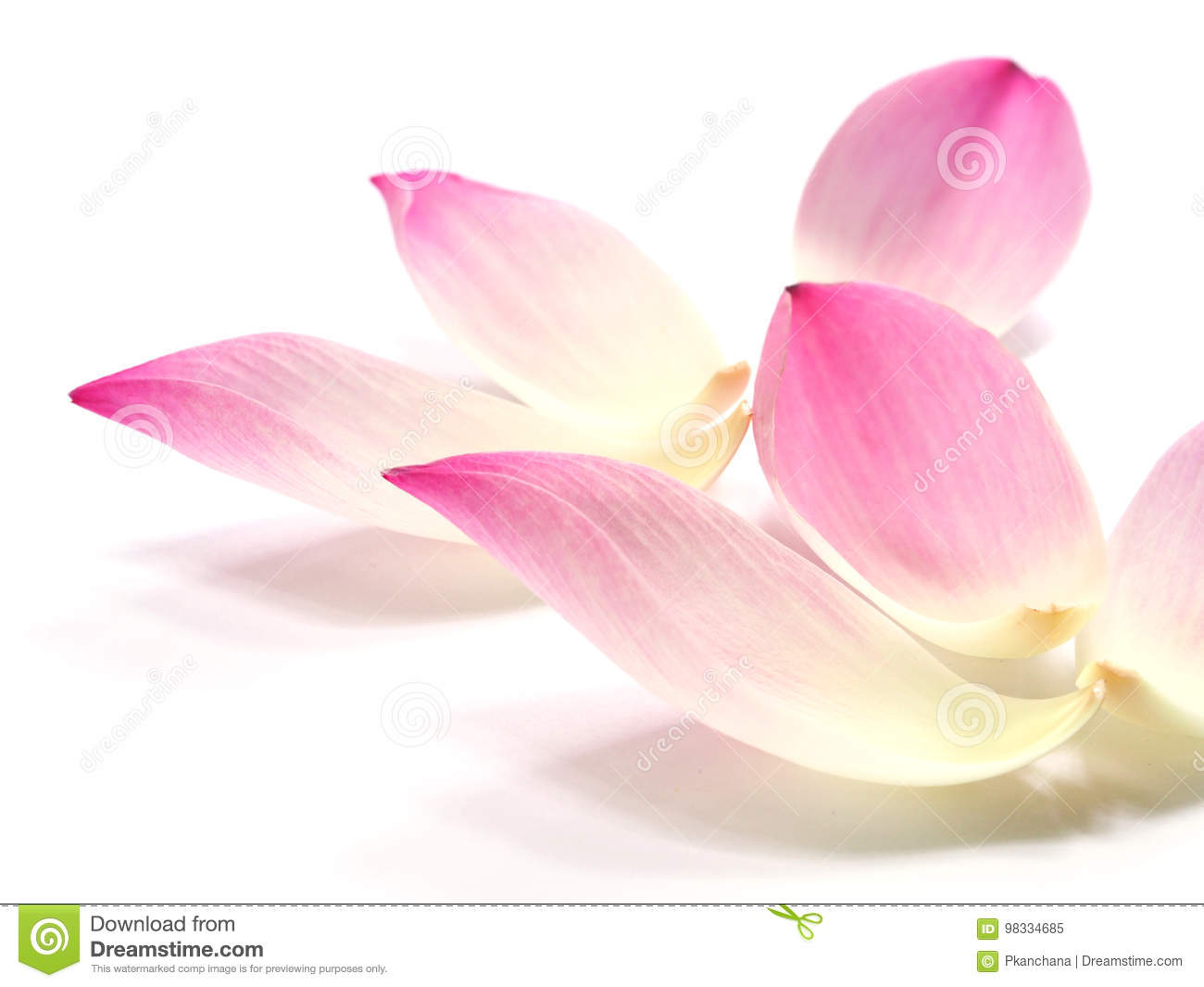 Pink Lotus Petals Flower On White Background Stock Image Image Of