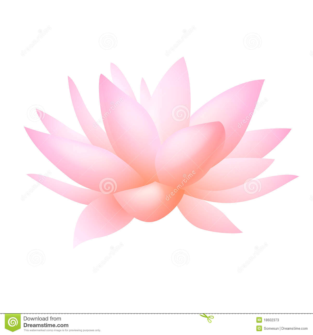 Pink Lotus Or Water Lily Flower Vector Stock Vector Illustration