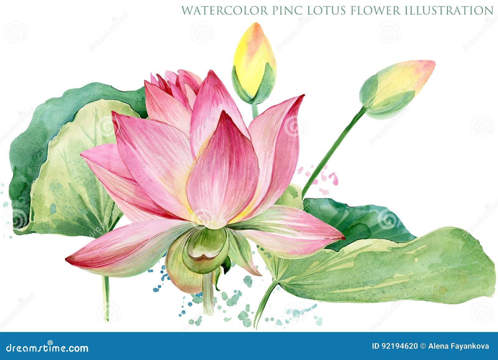 Pink Lotus Watercolor Botanical Illustration Stock Illustration