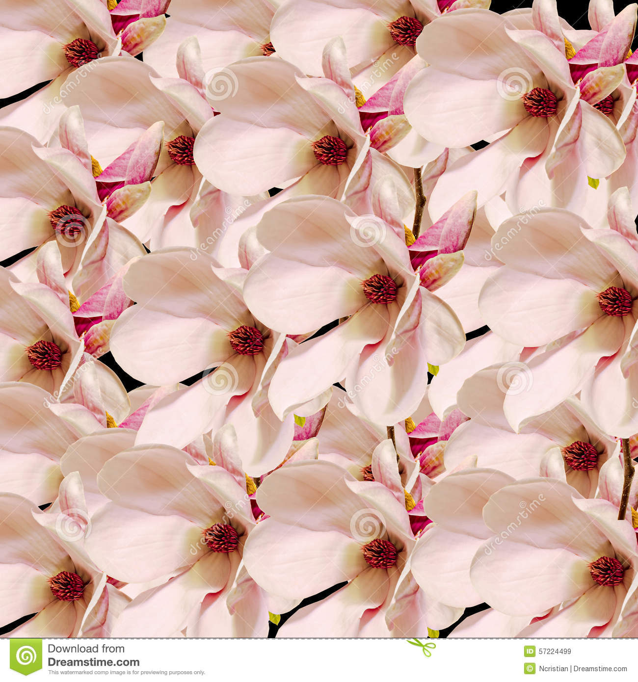 Pink Magnolia Branch Flowers Close Up Floral Arrangement Isolated Stock Image Image Of Purity Nature 57224499
