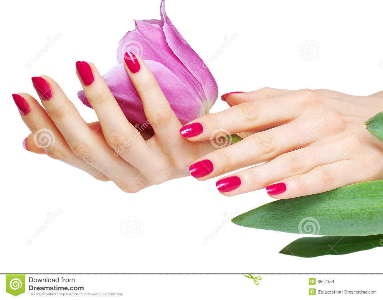 Pink manicure and tulip