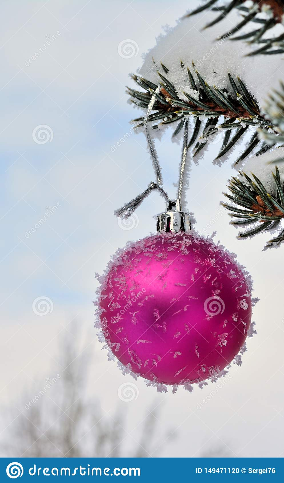 Pink New Year ball on live fir-tree with frost and snow