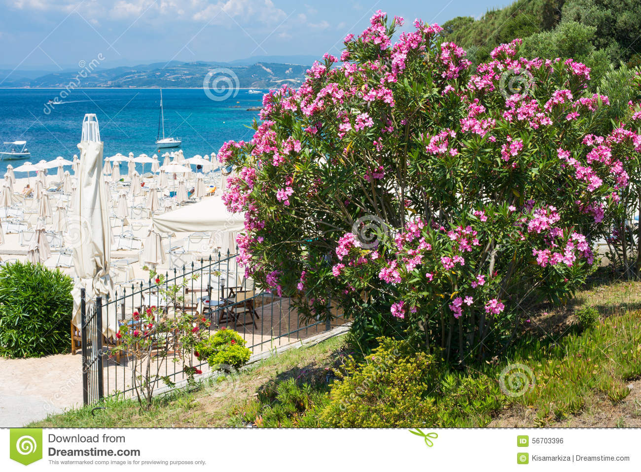 Pink Oleander Flowers Beach With Umbrellas And The Blue Sea Stock