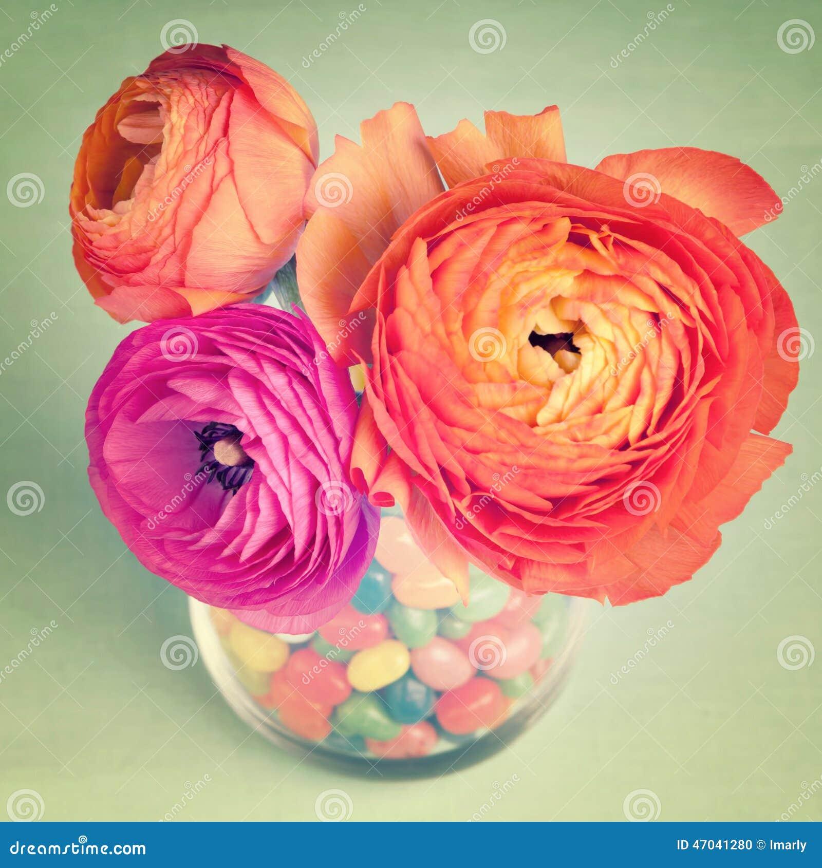 Pink and orange colorful ranunculus in a vase
