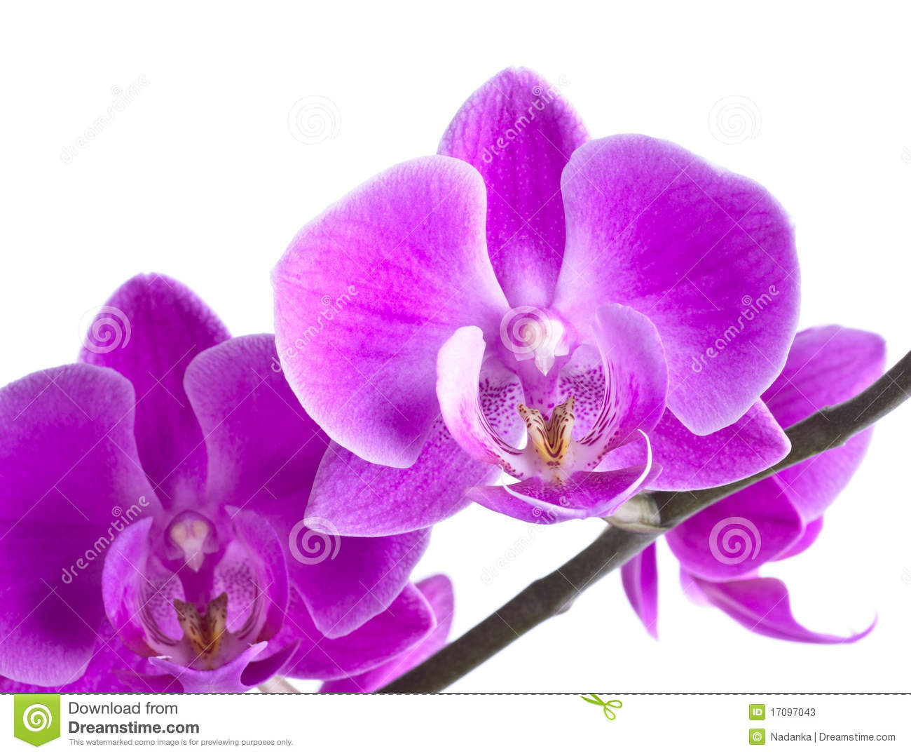 pink orchid flower stock photos  image, Beautiful flower