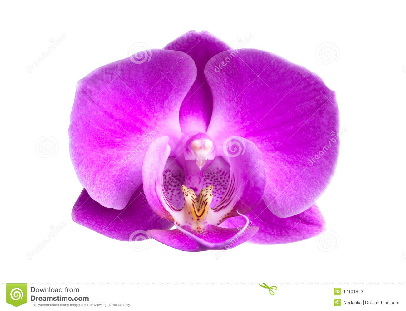 pink orchids close up - photo #17