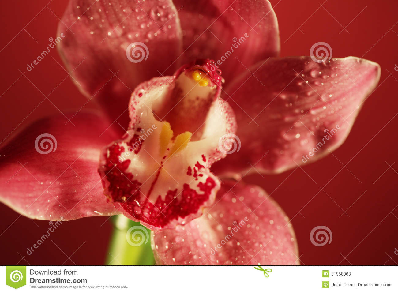 pink orchids close up - photo #28