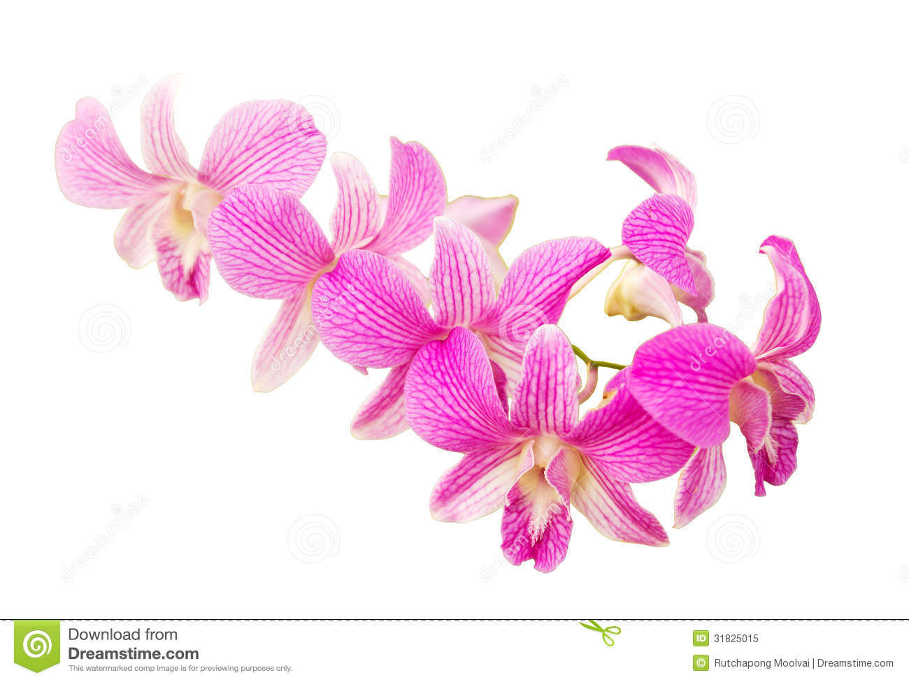 Pink Orchid Flower Royalty Free Stock Photo - Image: 31825015