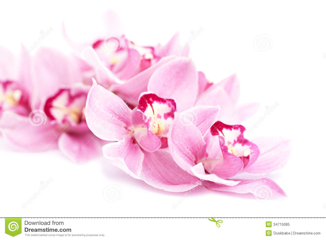 ... Orchid Flowers Isolated Royalty Free Stock Photo - Image: 34715085
