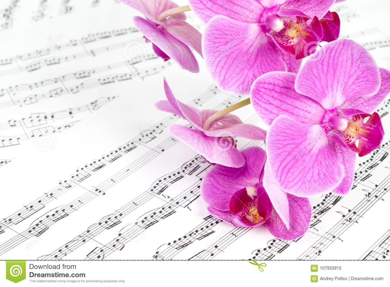 Pink Orchid Flowers On Music Sheet Stock Image Image Of Flower
