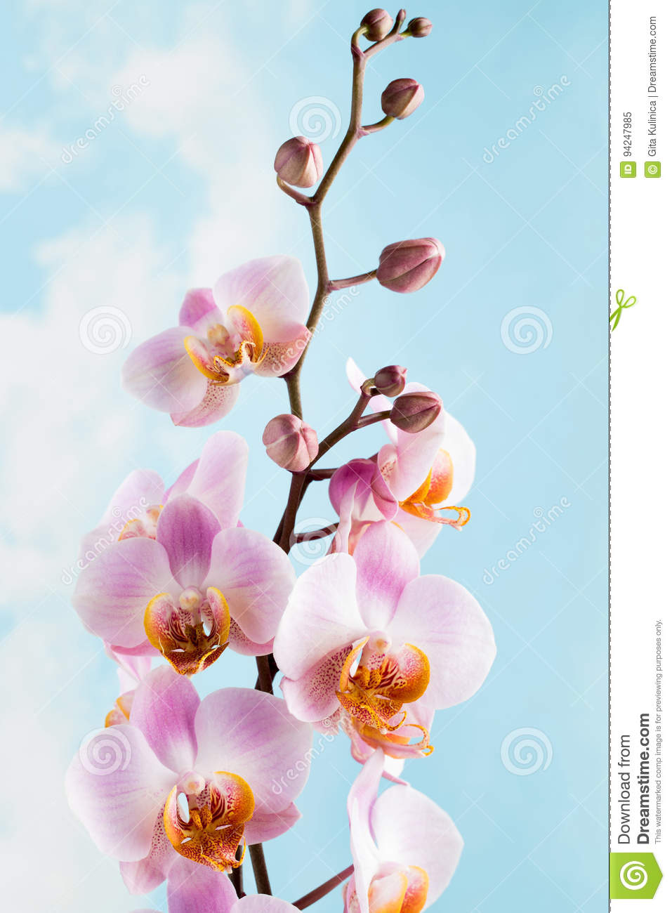 Pink orchid on the grey background stock image image of flower download pink orchid on the grey background stock image image of flower symbol mightylinksfo