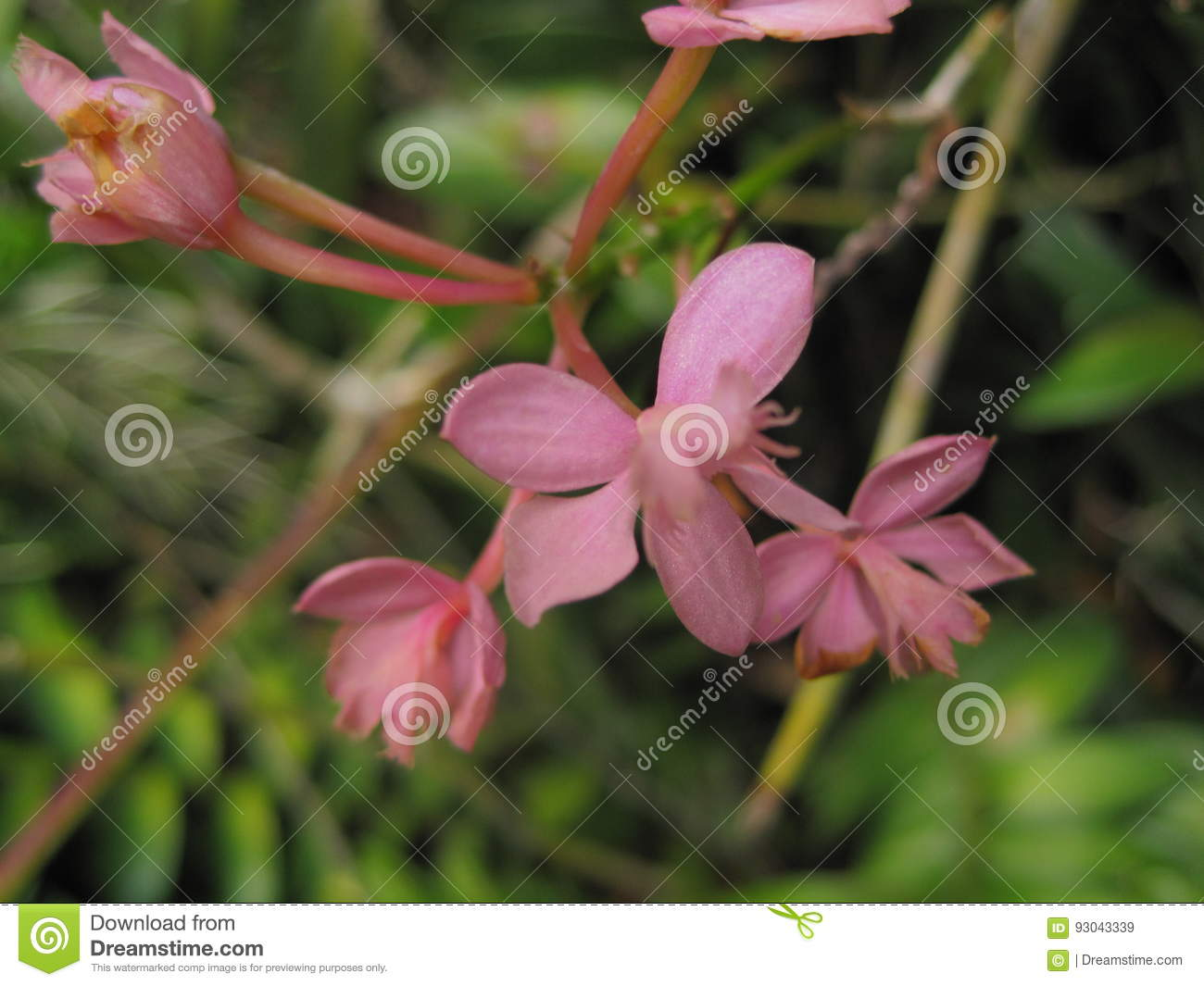Pink Orchid Stock Image Image Of Some Background Green 93043339