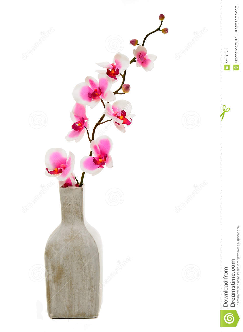 Pink Orchid In Vase Stock Image Image Of Yellow Square