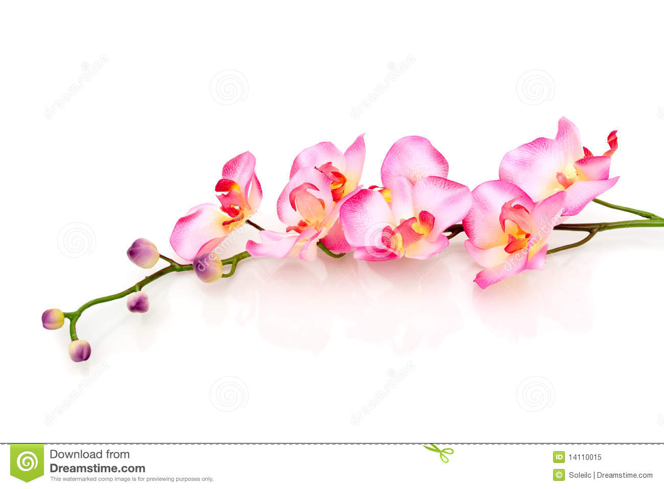 Pink Orchid On White Background Royalty Free Stock Photo ...