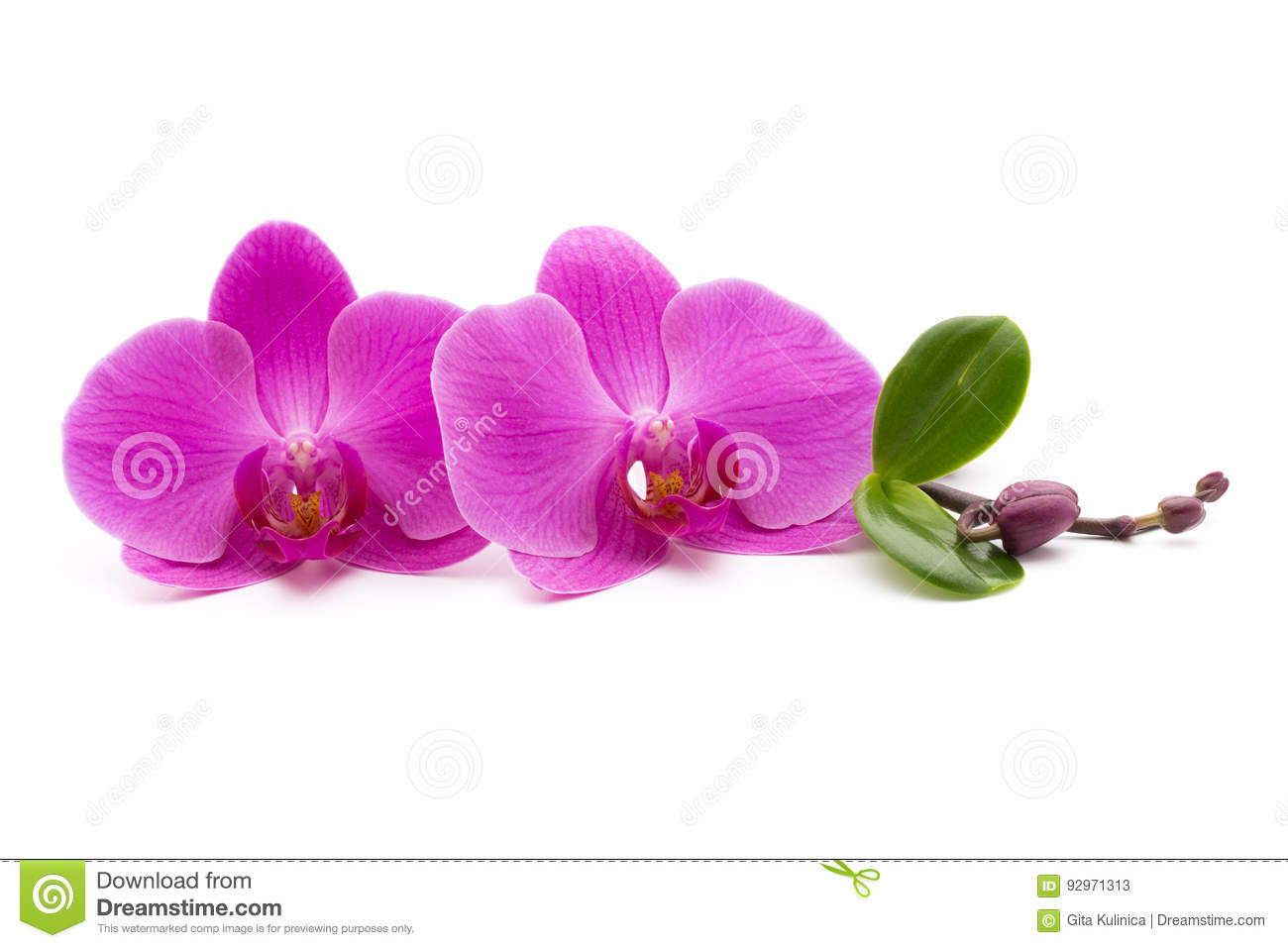 White pink orchid isolated on white background — Stock Photo ...