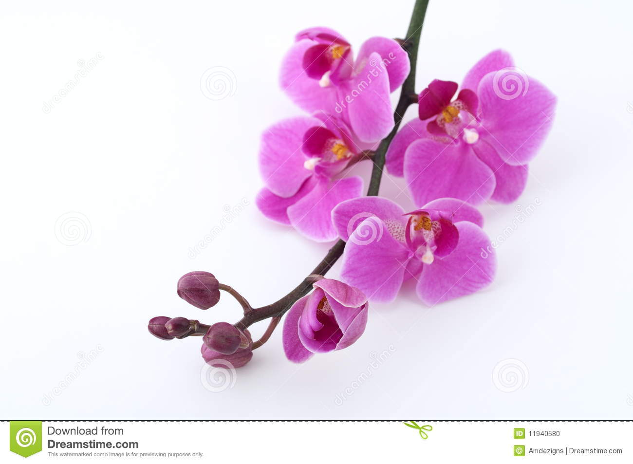 Red Mac Wallpaper moreover Rhombus together with Burst Purple Sunburst Rays Cyan C2 17f8fc 9932cc K2 0 75 L2 4 0 A 45 F 22 Image in addition White Orchids further Rose Wallpaper. on orchid background wallpaper