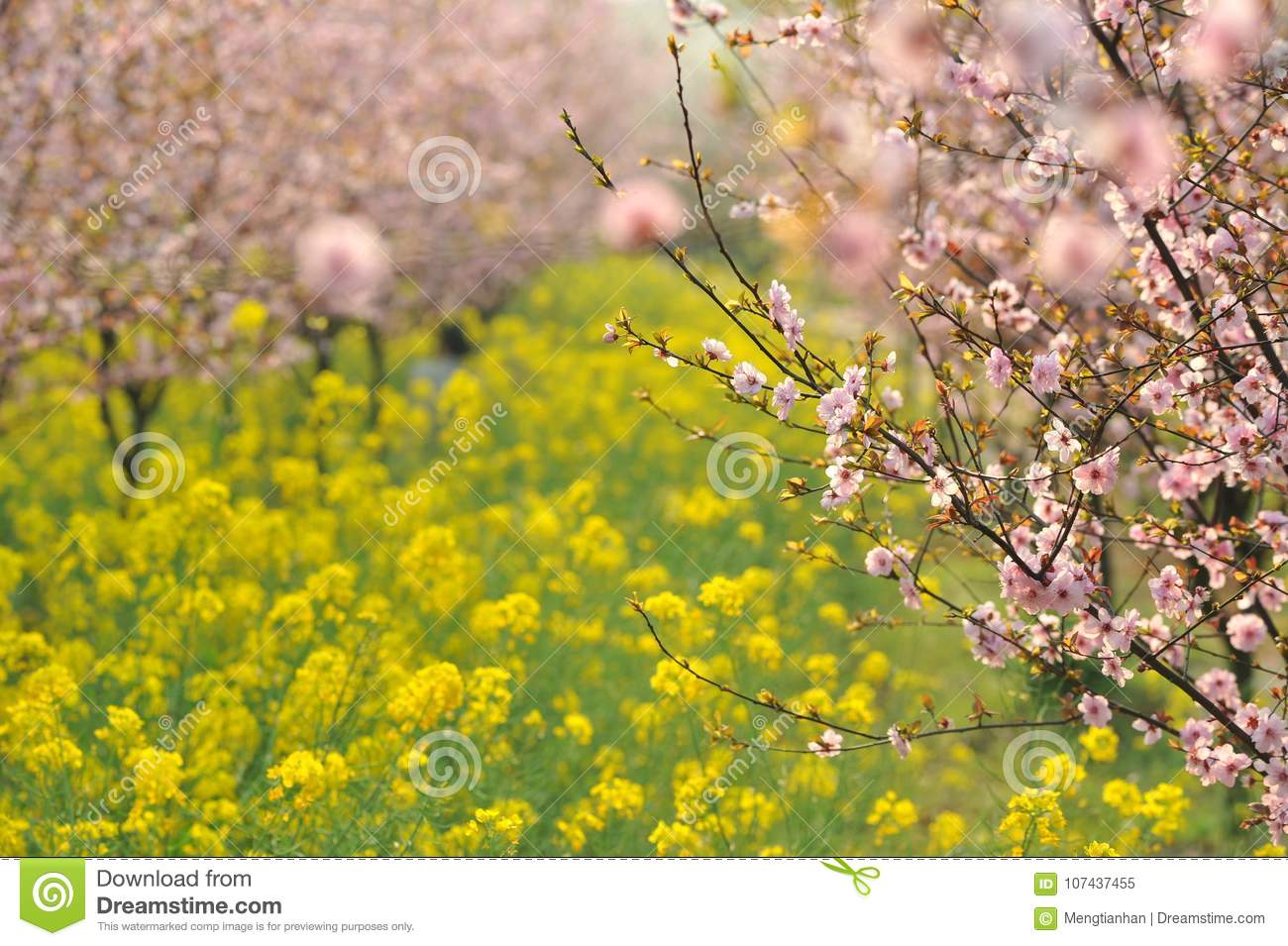 Pink peach and plum blossom-flower and seedling industry