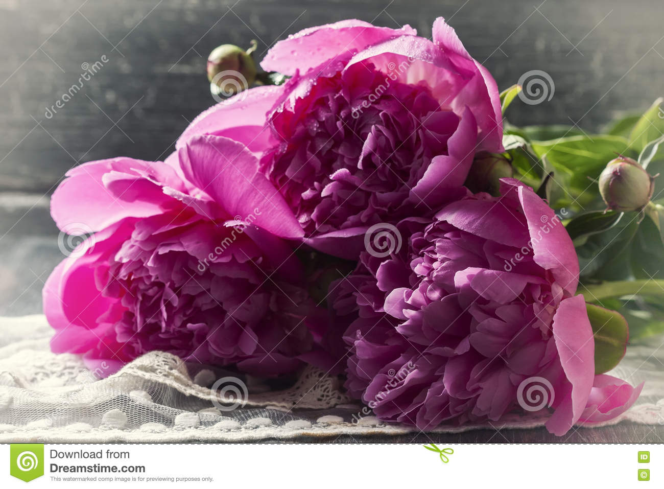 Pink Peonies With Drops Of Water  Tonal Processing Stock Photo