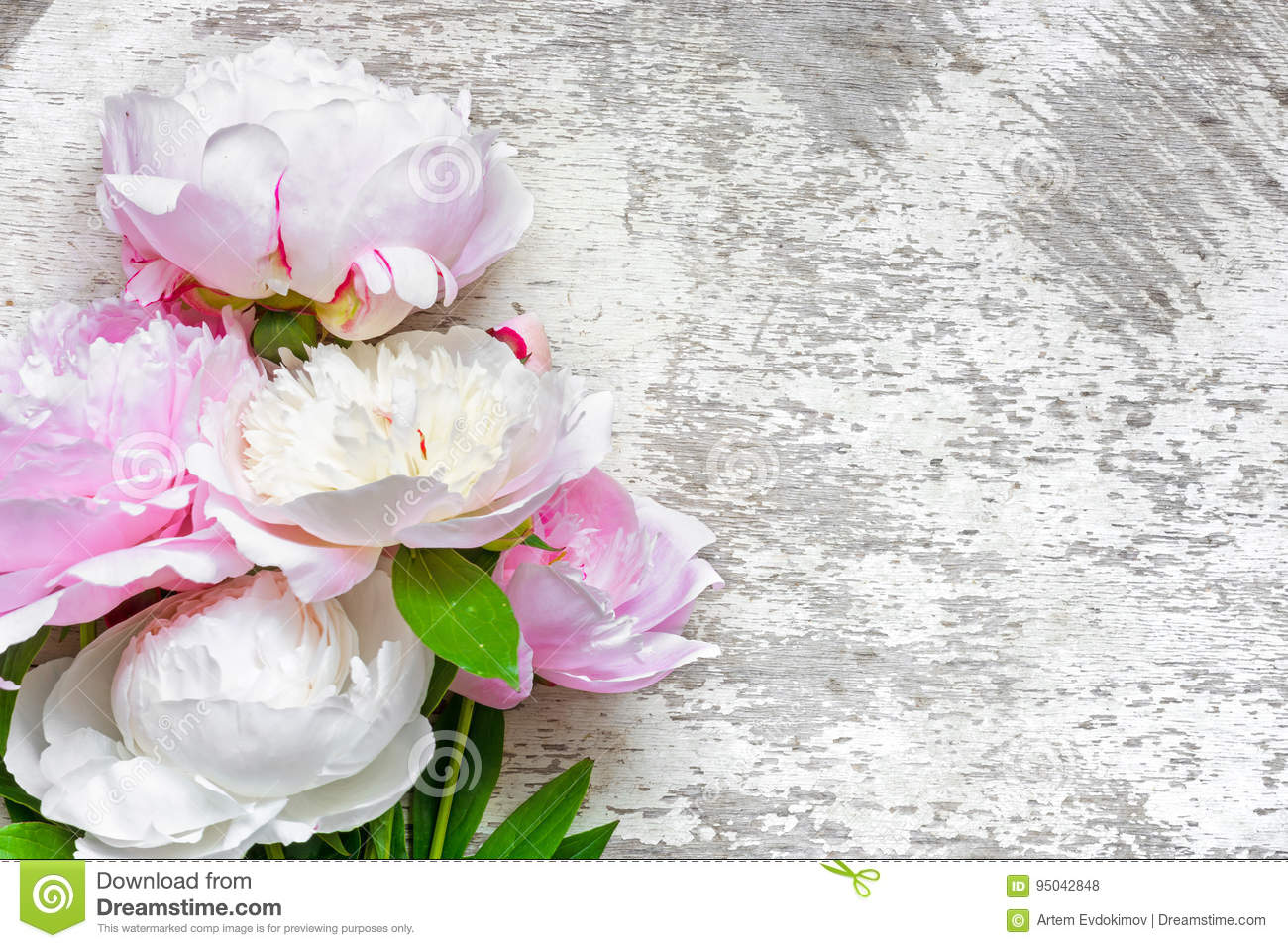 Pink peonies flowers on white wooden background stock photo image download comp mightylinksfo