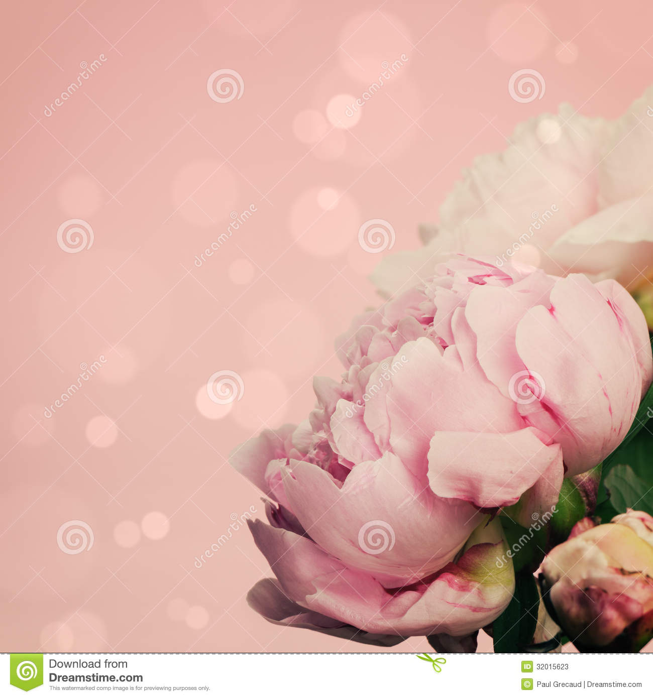 The Pink Peonies Pink Peonies Border Stock Photos Images & Pictures  431 Images