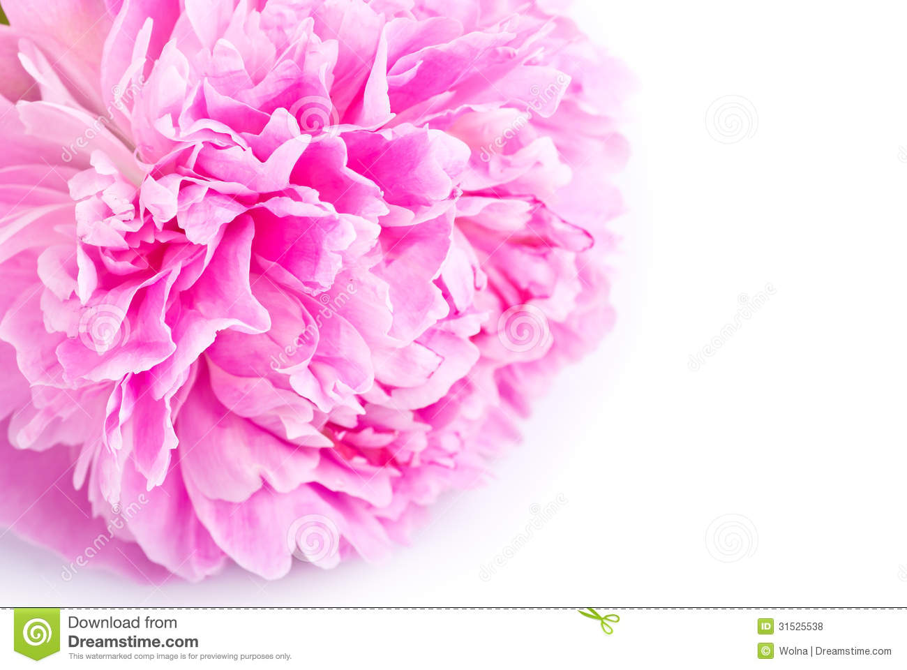 Pink peony flower close up royalty free stock photos image 31525538 background flower peony pink dhlflorist Images