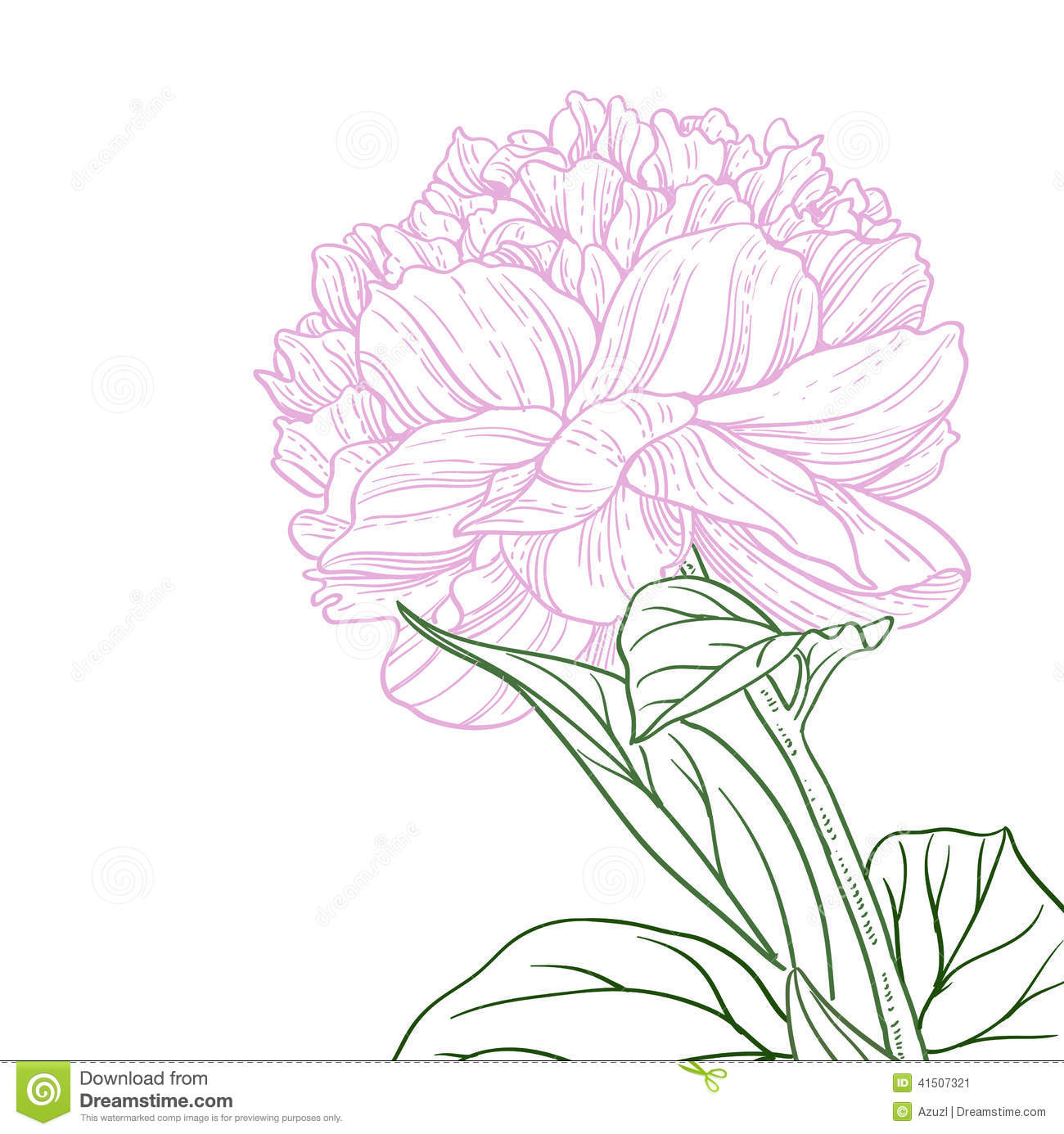 Pink Flower Line Drawing : Pink peony flower line art stock vector image
