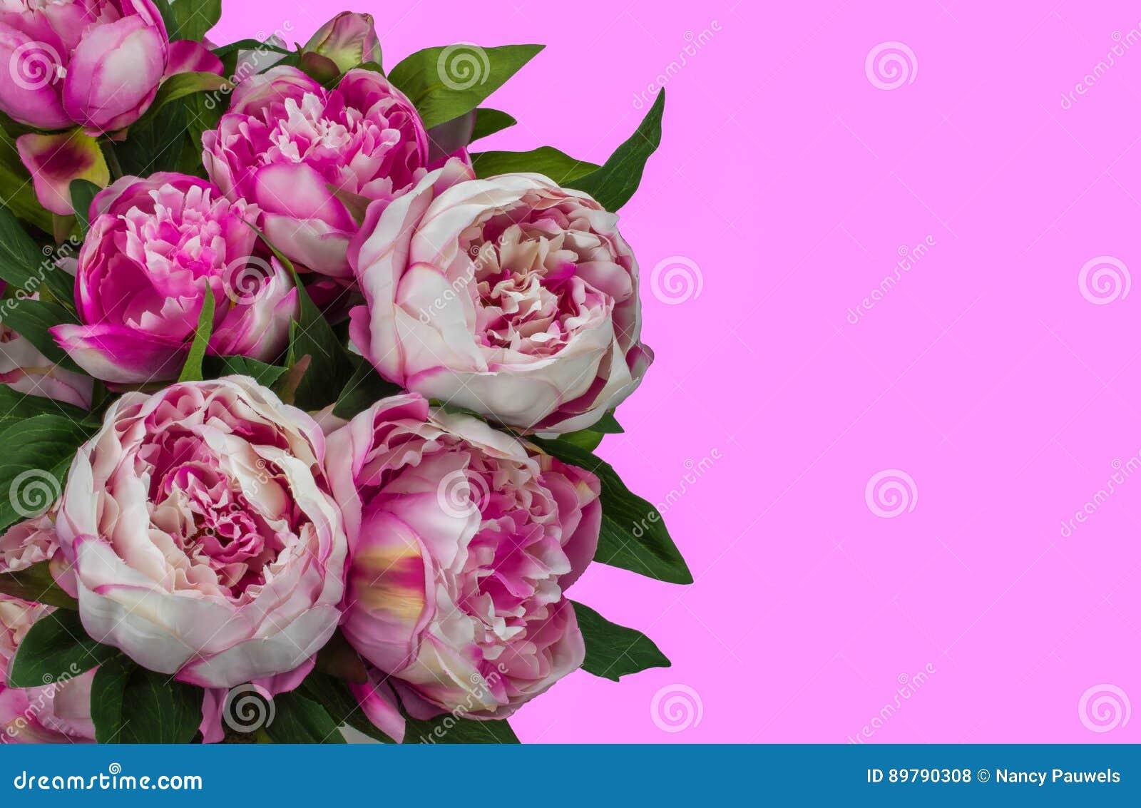 Pink Peony Flowers Stock Photo Image Of Bloom Peonies 89790308