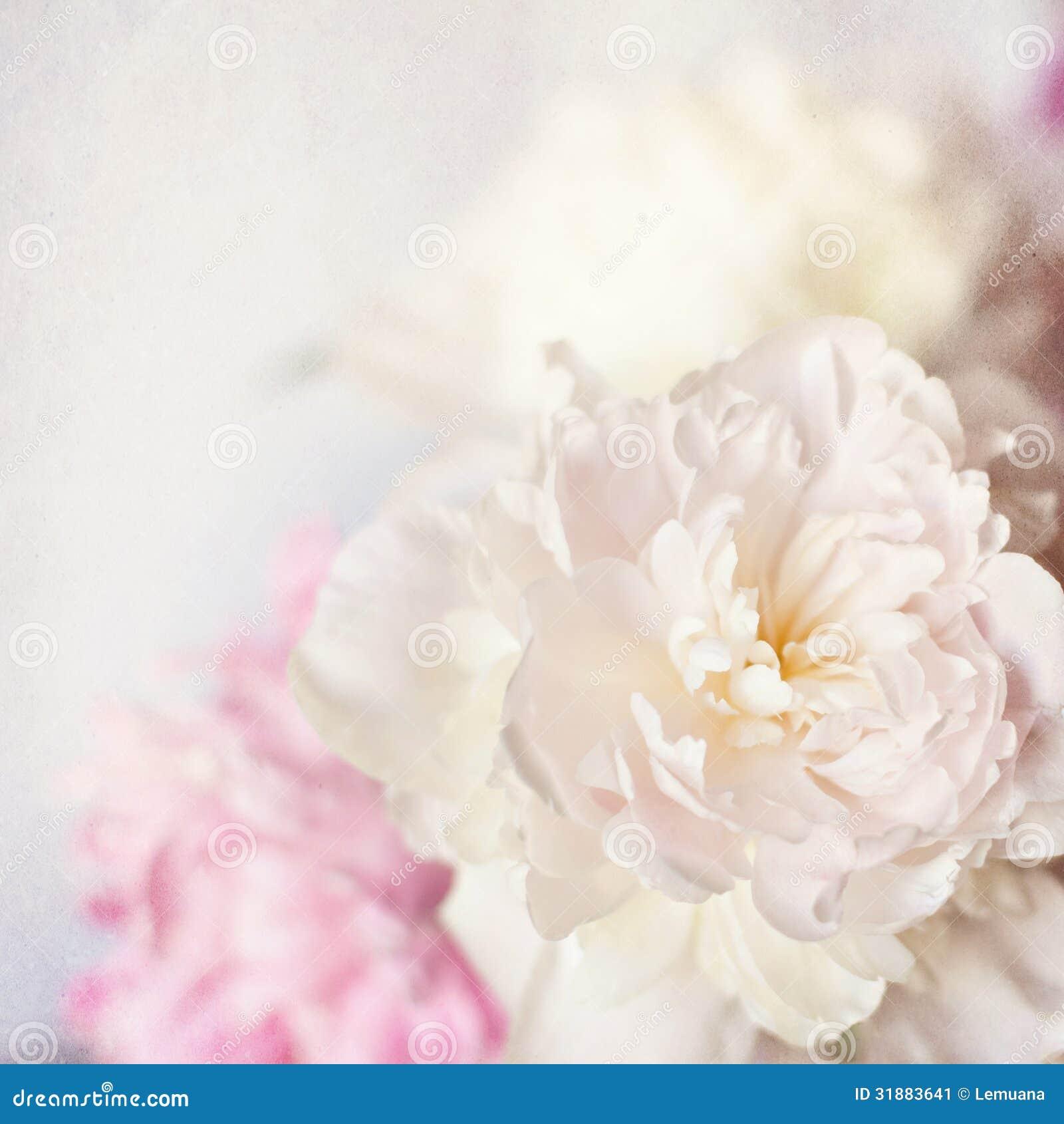 Pink Peony Vintage Background Stock Image Image Of