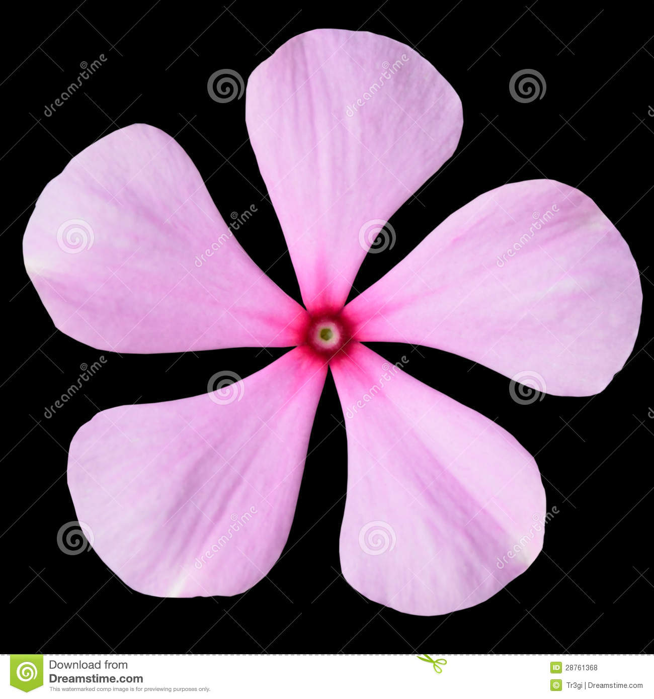 Pink periwinkle flower with red center isolated stock photo image pink periwinkle flower with red center isolated mightylinksfo