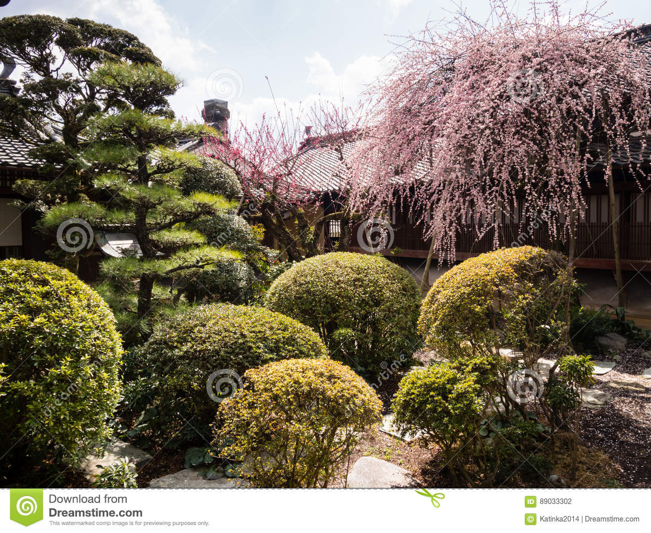 Pink Plum Tree Blossoming In Traditional Japanese Garden Editorial ...