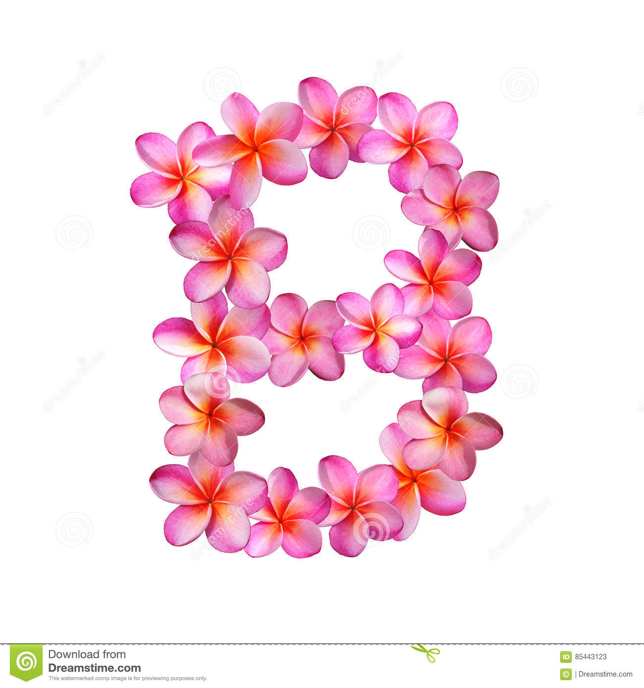 Pink Plumeria Flowers Letter B Stock Illustration - Illustration of ...