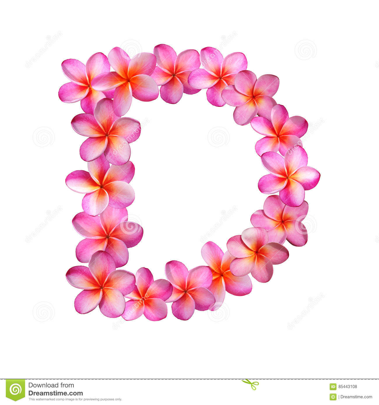 Pink Plumeria Flowers Letter D Stock Illustration - Illustration of ...