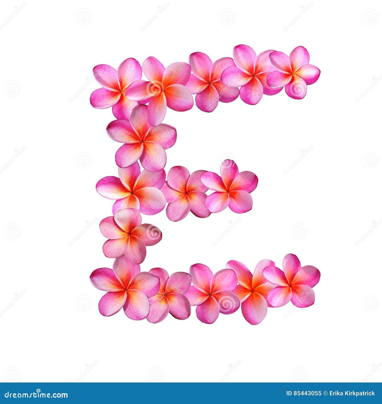 Pink Plumeria Flowers Letter E Stock Illustration - Illustration of ...