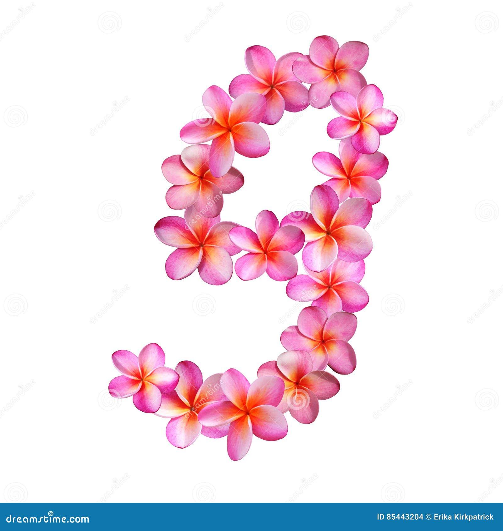 Pink Plumeria Flowers Letter G Stock Illustration - Illustration of ...