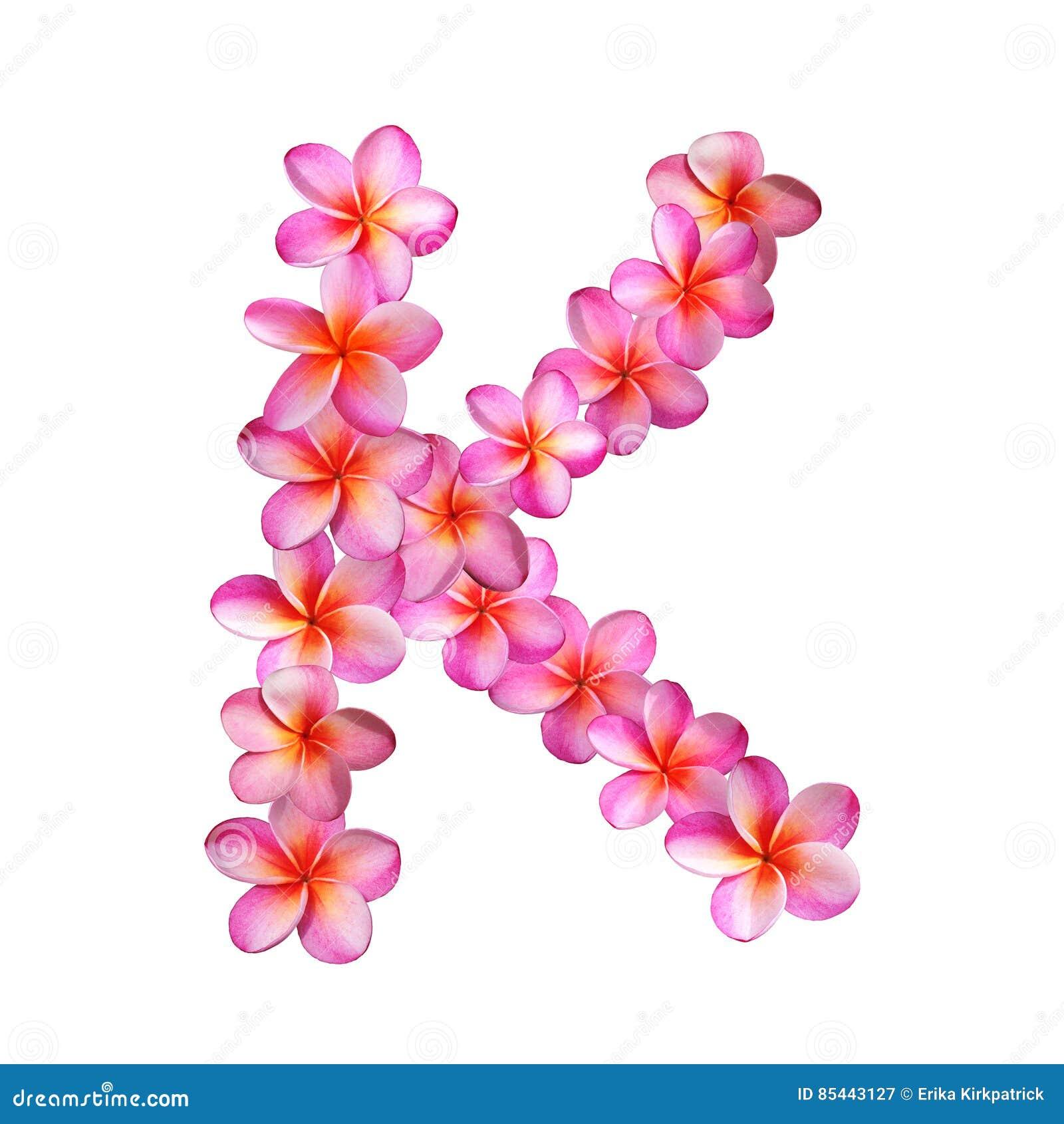 Pink Plumeria Flowers Letter K Stock Illustration - Illustration of ...