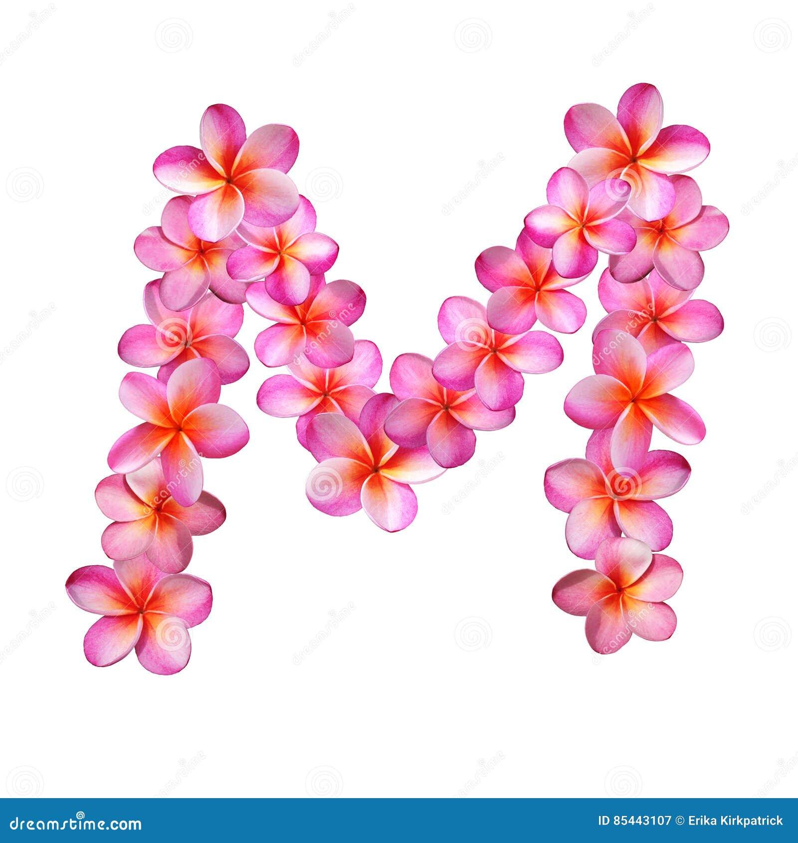 Pink Plumeria Flowers Letter M Stock Illustration - Illustration of ...