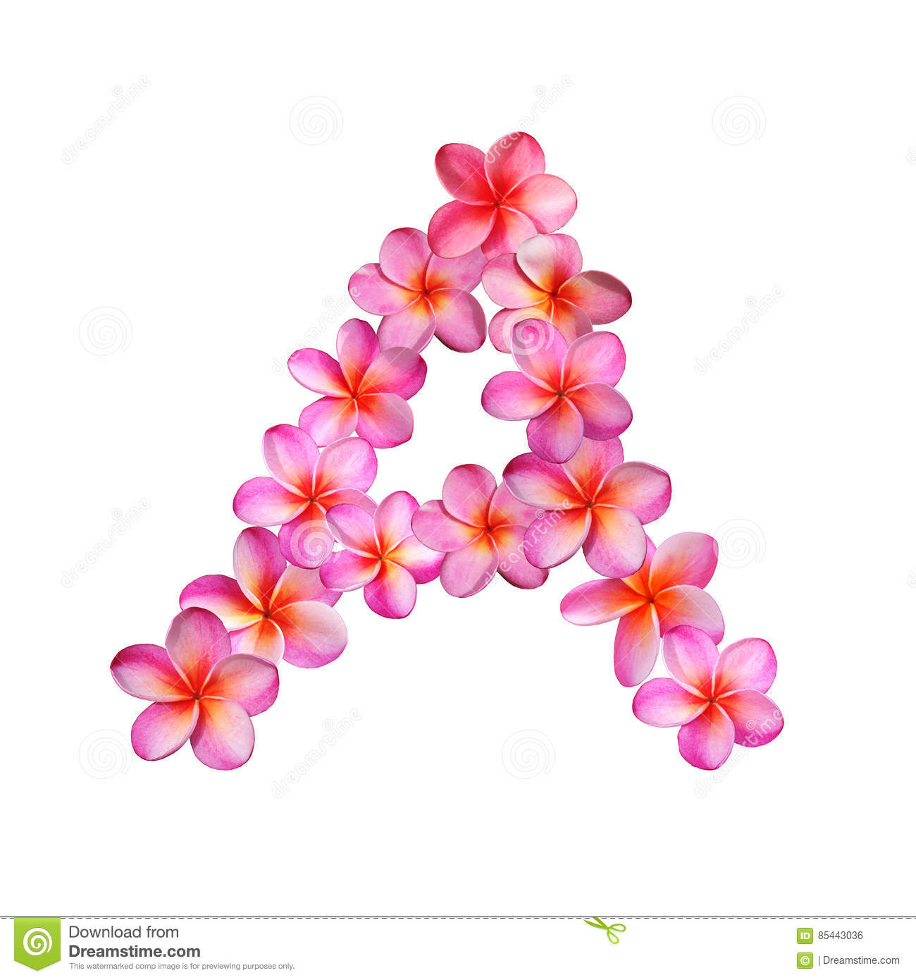 Pink Plumeria Flowers Letter A Stock Illustration - Illustration of ...