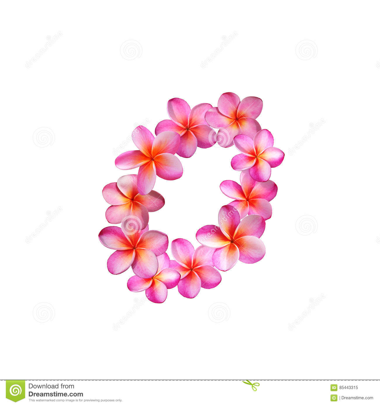 Pink Plumeria Flowers Letter O Stock Illustration - Illustration of ...