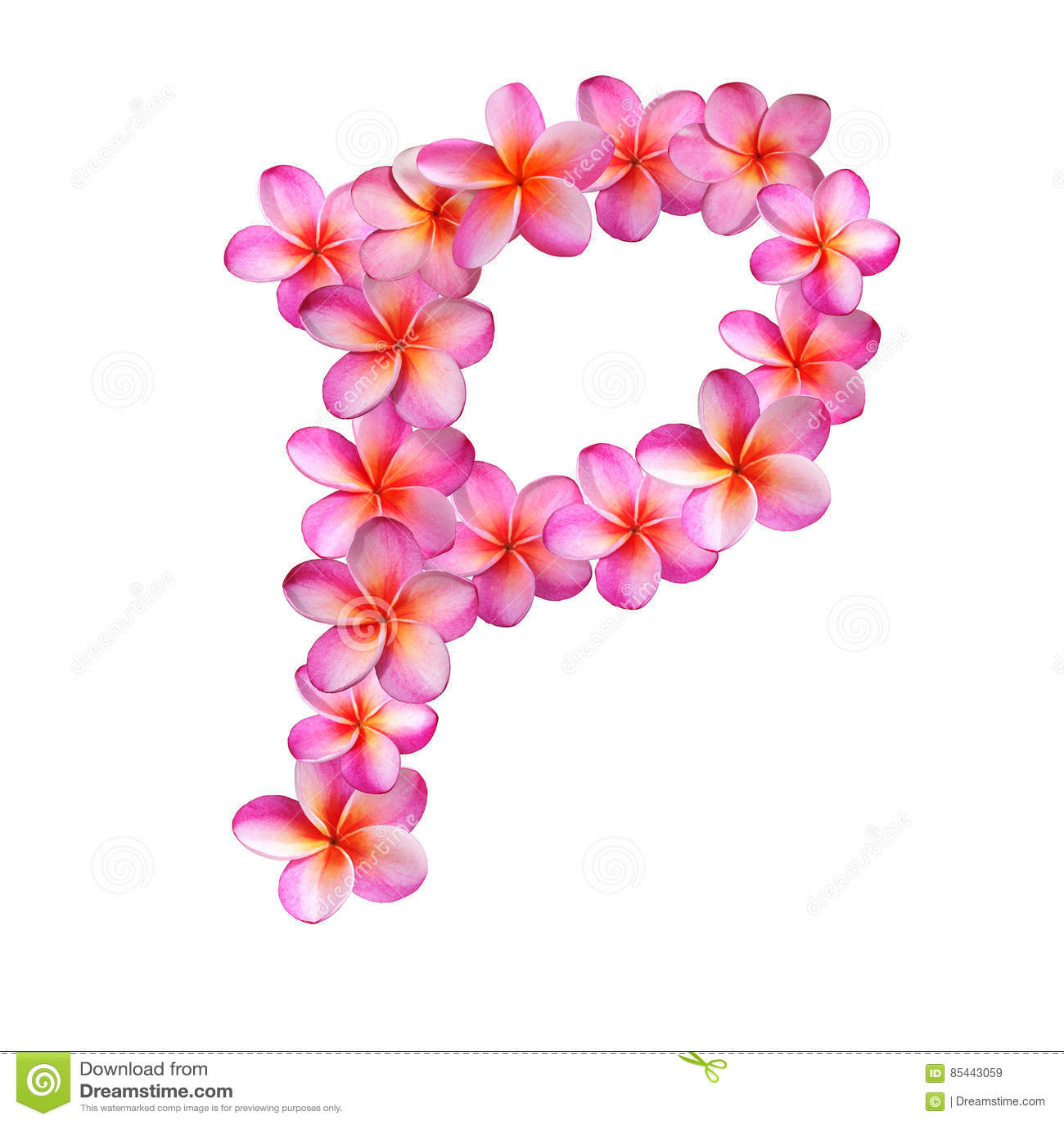 Pink Plumeria Flowers Letter P Stock Illustration - Illustration of ...