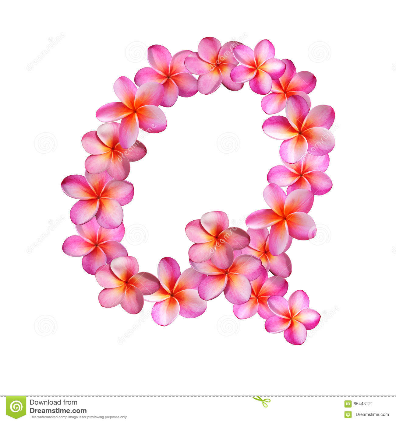 Pink Plumeria Flowers Letter Q Stock Illustration - Illustration of ...