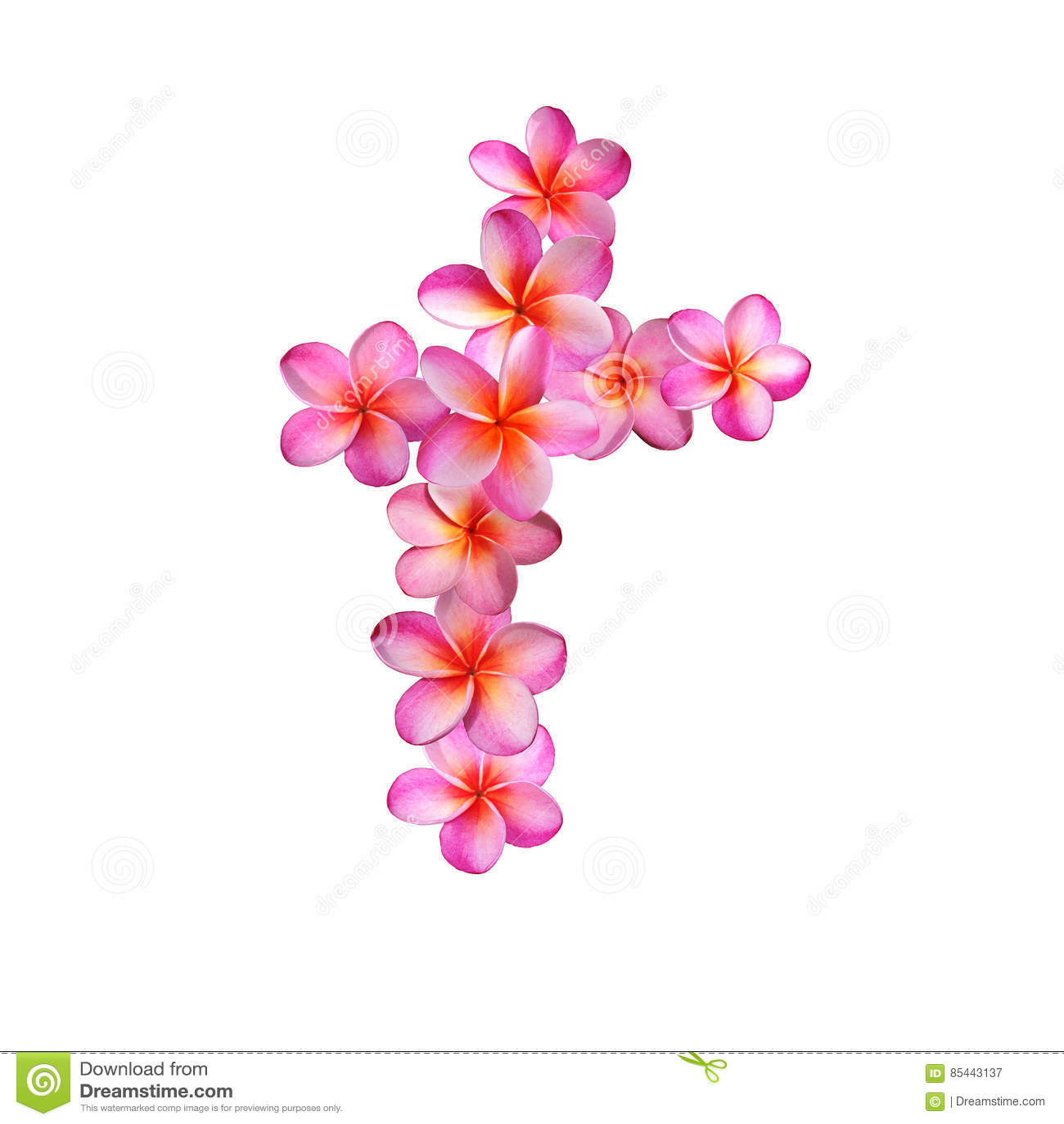 Pink Plumeria Flowers Letter T Stock Illustration - Illustration of ...