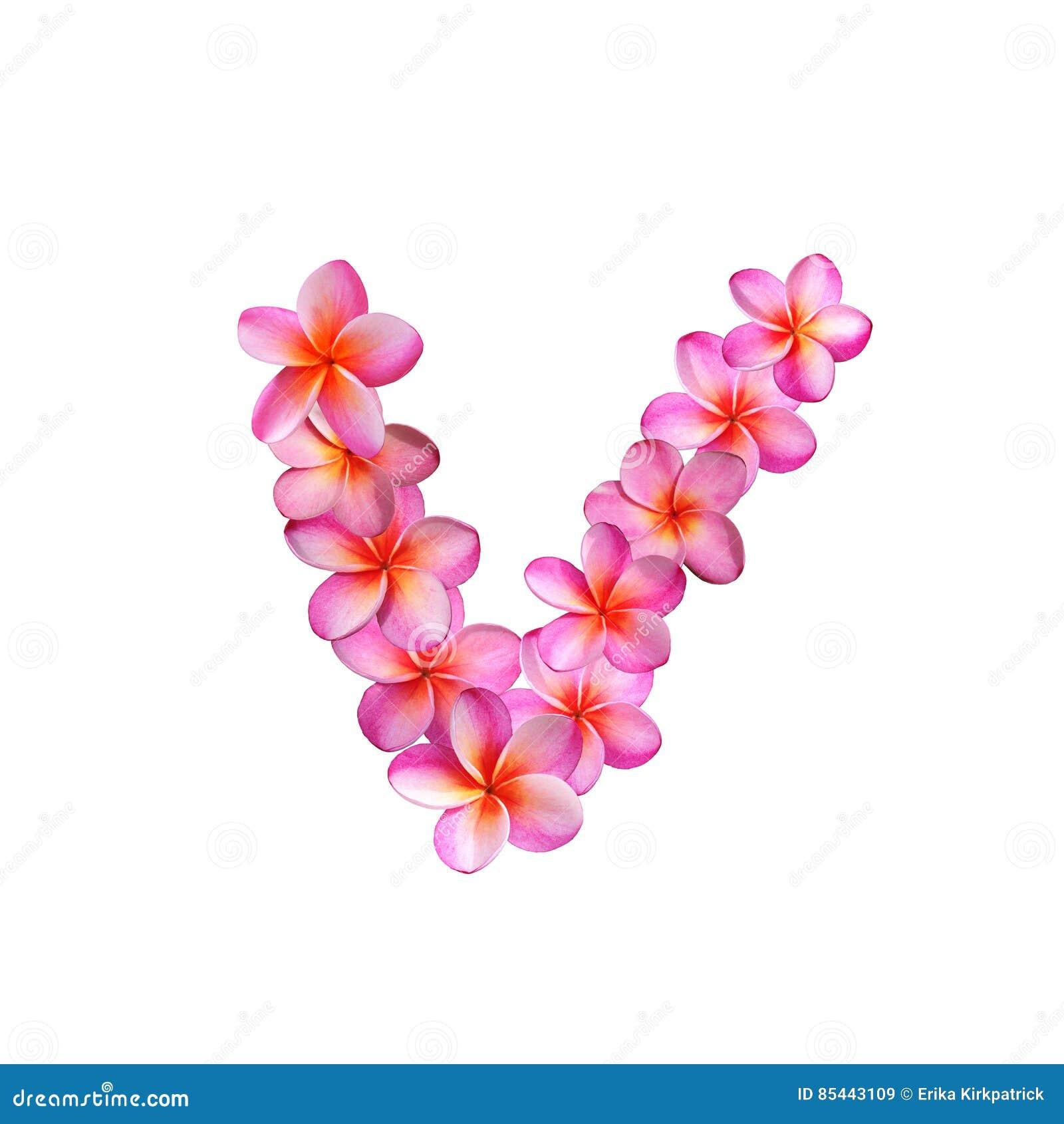 Pink Plumeria Flowers Letter V Stock Illustration - Illustration of ...