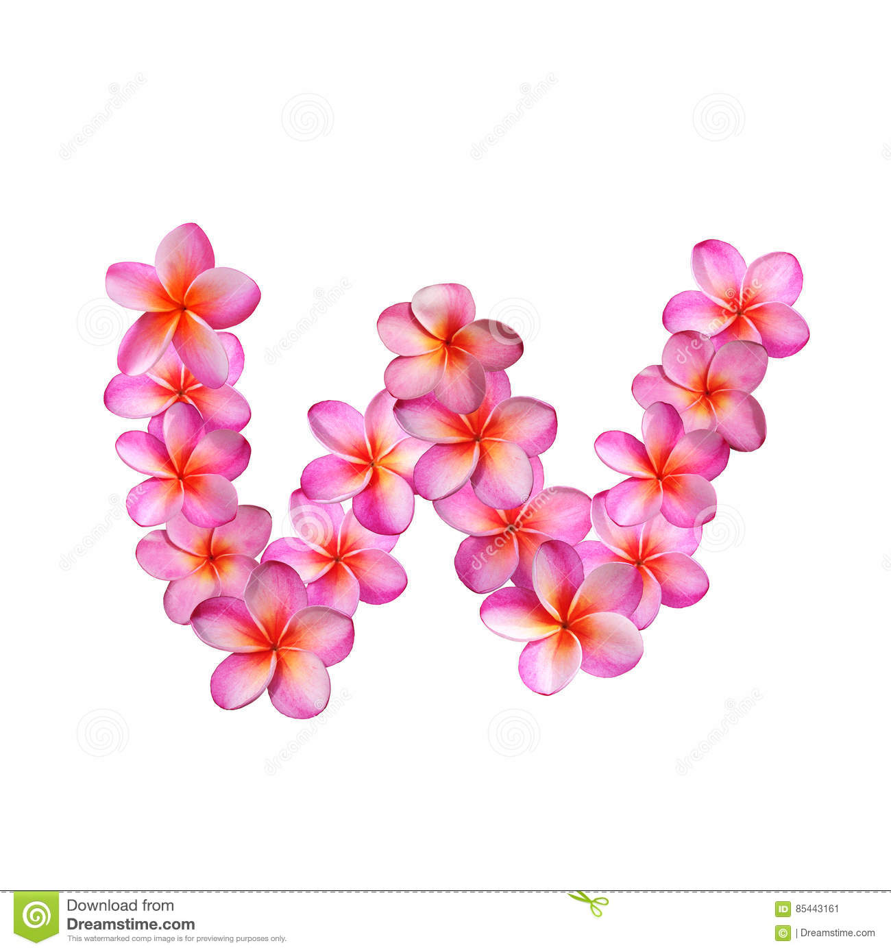 Pink Plumeria Flowers Letter W Stock Illustration - Illustration of ...