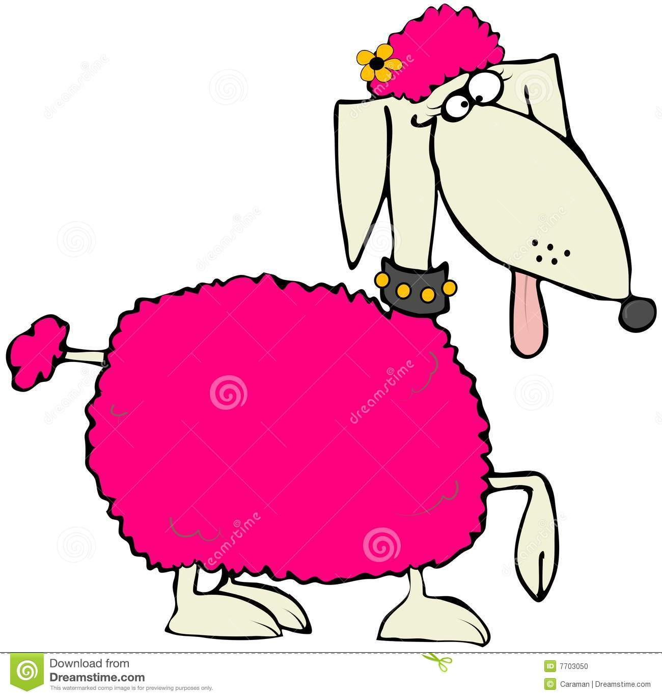 Pink Poodle Stock Photo Image 7703050