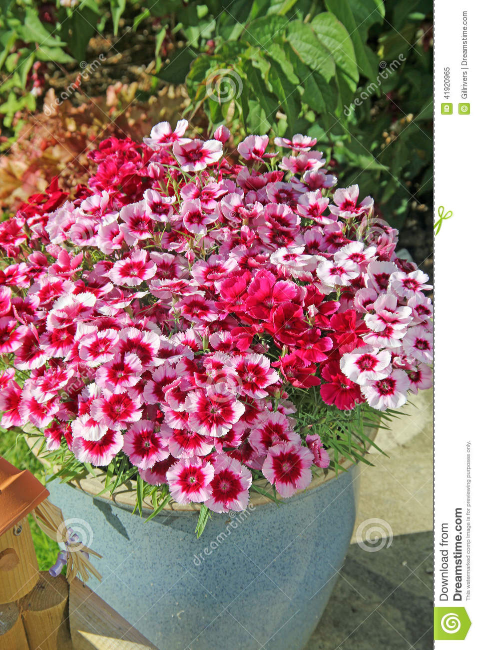 Pink potted flowers stock image image of pretty pansies 41920965 pink potted flowers mightylinksfo