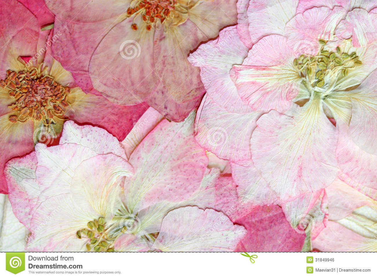 Pink Pressed Flowers Background Royalty Free Stock Image Image