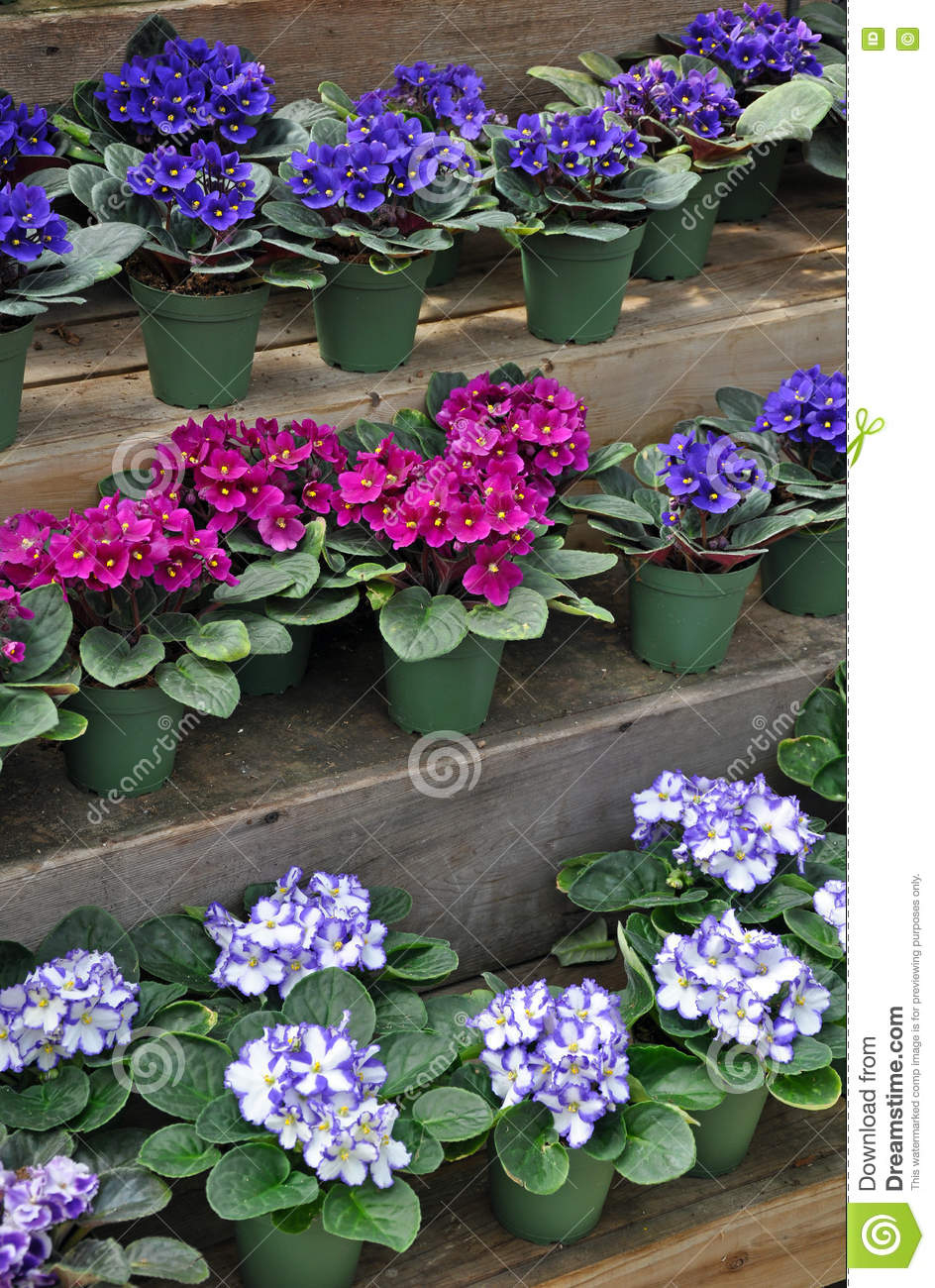 Handpainted African Violet Pot Purple Petunia/'s and Butterfly