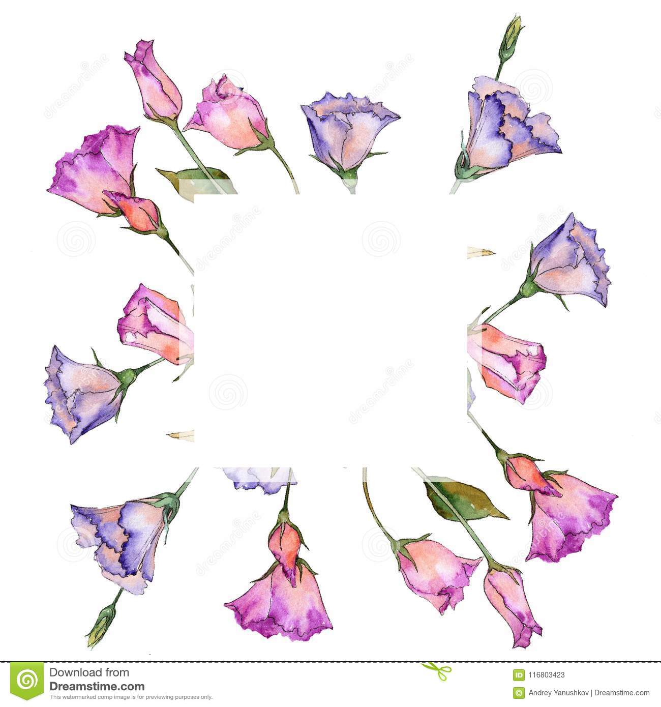 Pink and purple eustoma. Floral botanical flower. Wild spring leaf wildflower frame.